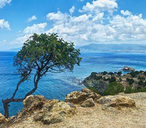 tree sea view cyprus