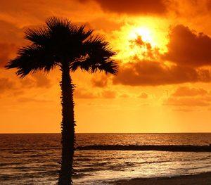 sunset sea palm tree orange