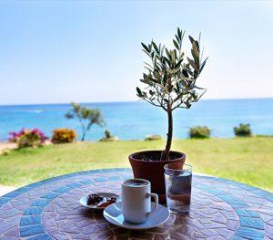 plant sea grass coffee table
